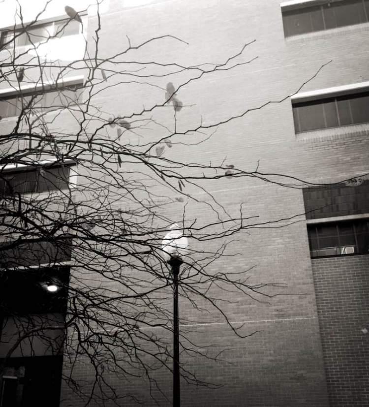 lampleaves